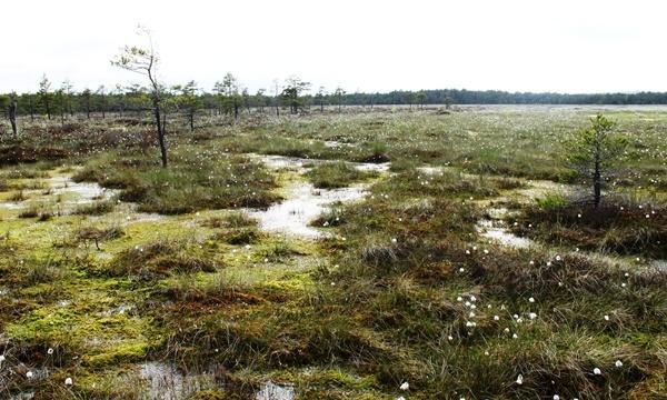 Kamanų rezervatas