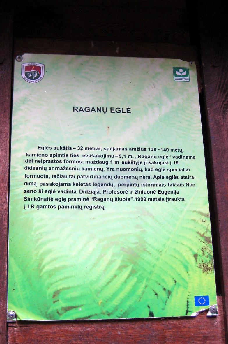 Raganų eglė