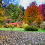 I.Navidansko botanikos parkas