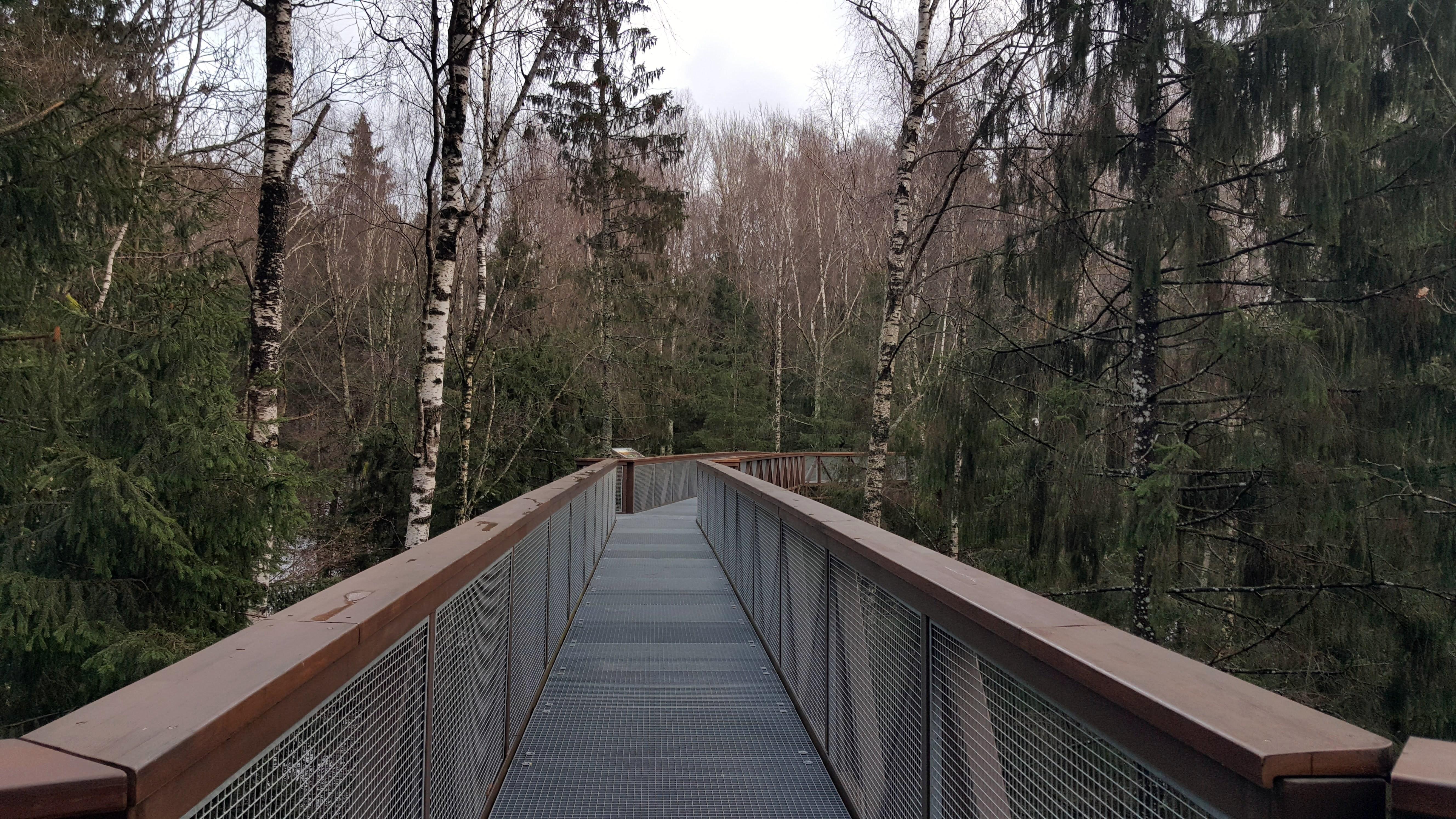 Medžių lajų takas