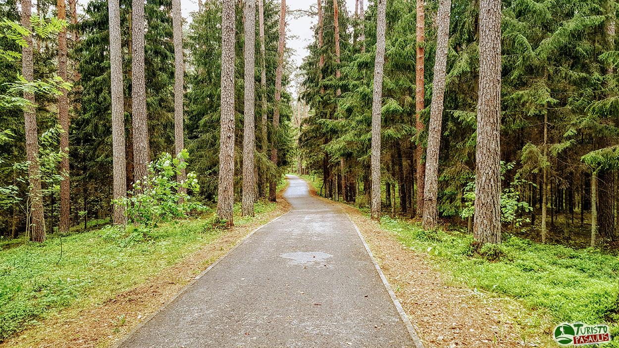 Žvėrinčiaus miško takas